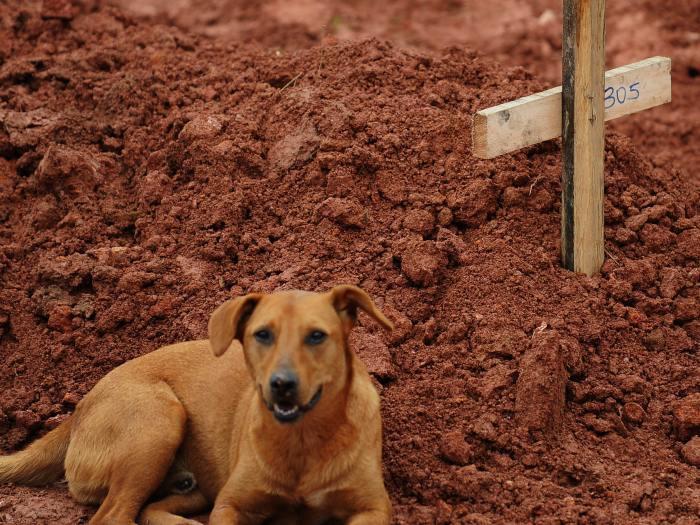 Com seu faro aguçado, o vira-lata Caramelo conseguiu encontrar a cova de sua ex-dona, morta durante um soterramento em Teresópolis - Crédito: RJ