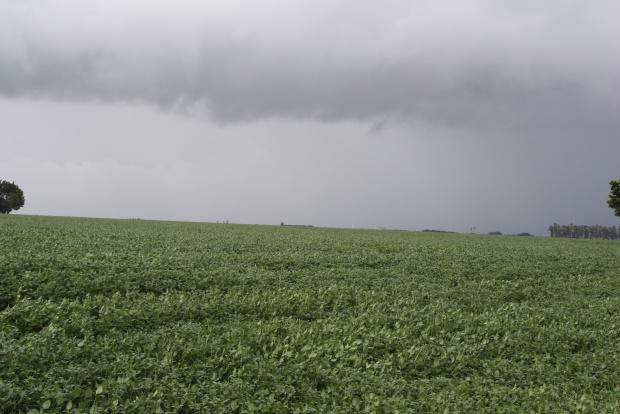Clima colabora com as lavouras de soja, apenas em algumas áreas não chove há pelo menos 20 dias  - Crédito: Foto: Hédio Fazan