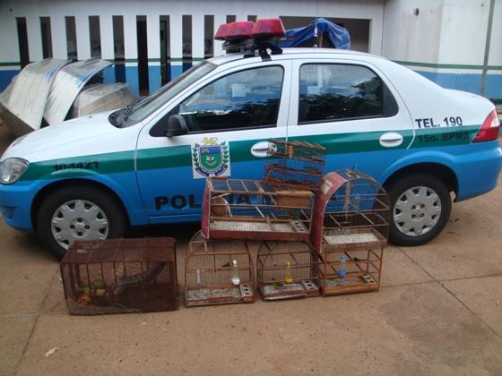 PMA apreendeu várias aves silvestres nas armadilhas - Crédito: Foto: Divulgação/PMA