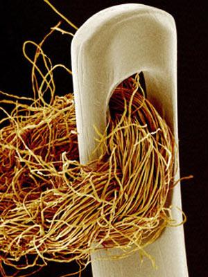 Microscópio especial permite ver detalhes de fio em agulha. - Crédito: Foto: Steve Gschmeissner / Barcroft Media