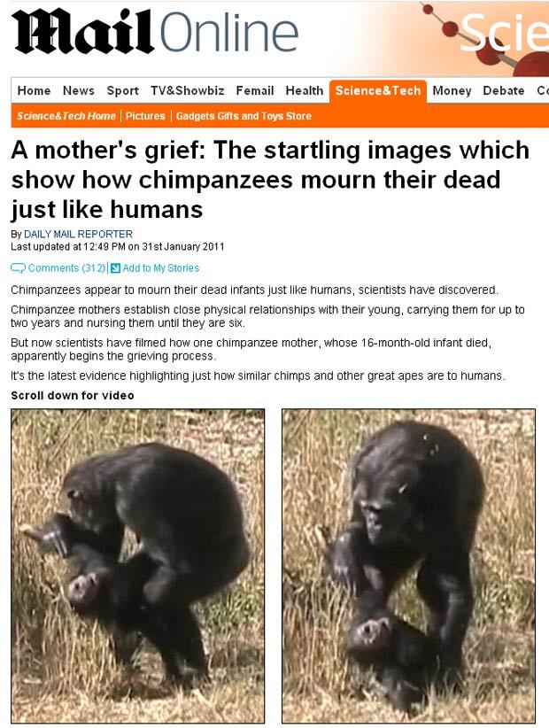 O luto da chimpanzé fêmea foi filmado por pesquisadores alemães. - Crédito: Foto: Reprodução / Daily Mail