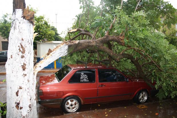Carro próximo ao terminal do Transbordo foi atingido por árvore - Crédito: Fotos: Hedio Fazan