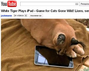 Felino brinca com aplicativo no iPad.  - Crédito: Foto: Reprodução/YouTube