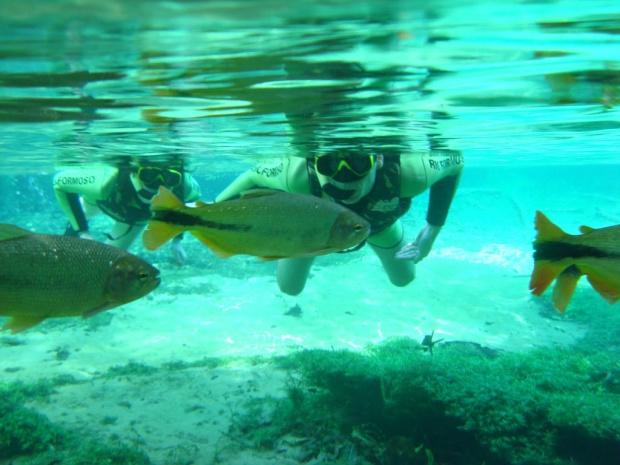 Mergulho nas águas cristalinas de Bonito é uma das principais atrações turísticas do Estado - Crédito: Foto: Divulgação