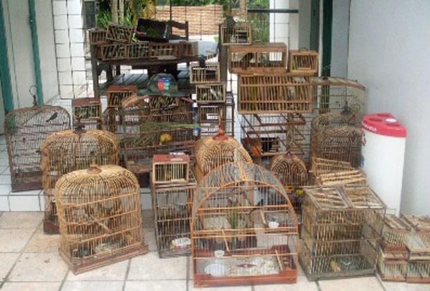 Aves foram apreendidas em feiras de dois municípios alagoanos. - Crédito: Foto: Divulgação