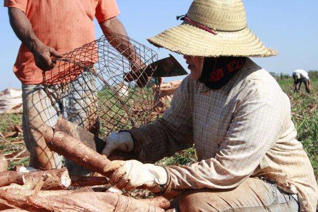 Pesquisadores se reuniram com os produtores rurais a fim de conhecer os métodos da região - Crédito: Foto : Divulga-ção