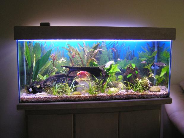 Manutenção depende do tamanho, do tipo da água e da configuração dos peixes - Crédito: Foto: Divulgação