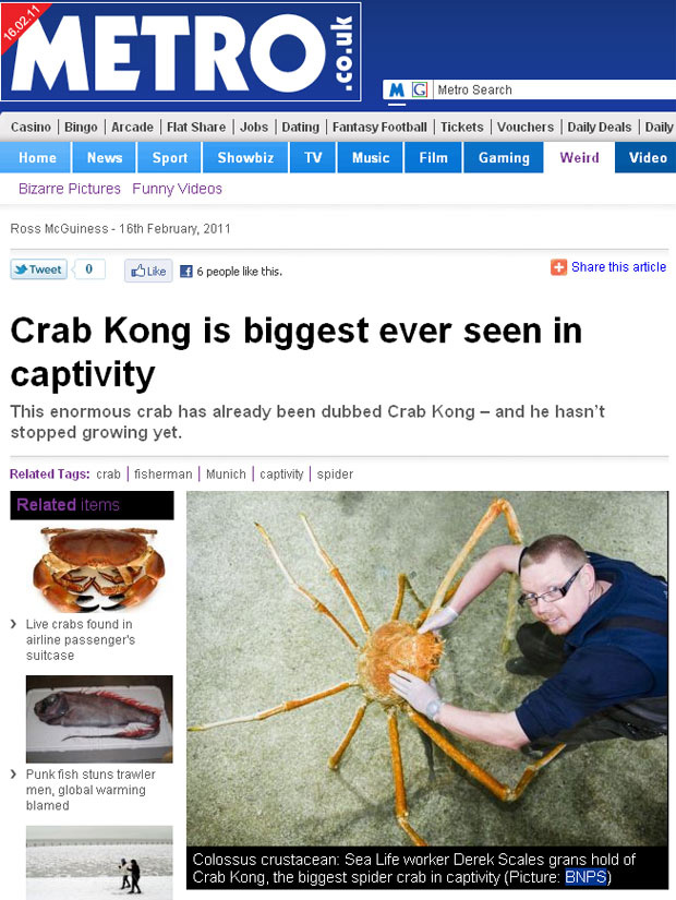 """O crustáceo \""""Kong\"""", obtido no Japão, pode ser o maior do mundo em cativeiro - Crédito: Foto: Metro / Reprodução"""