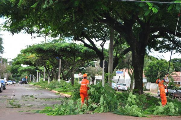 Legenda: Equipes da Semsur fazem poda de árvores na Hayel Bon Faker Crédito: A. Frota -