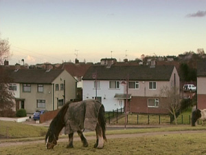Cavalos moram em conjunto habitacional na cidade de Bradford, na Grã-Bretanha - Crédito: Foto: BBC