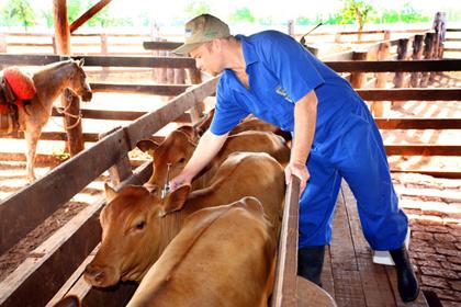 O setor da agropecuária foi o que mais empregou trabalhadores em janeiro - Crédito: Foto: Hedio Fazan/PROGRESSO