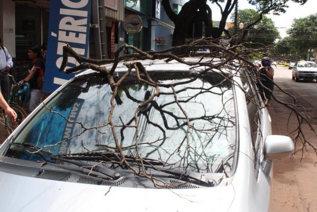 Árvore em risco já derrubou galhos e danificou veículos - Crédito: Foto: Hedio Fazan/PROGRESSO