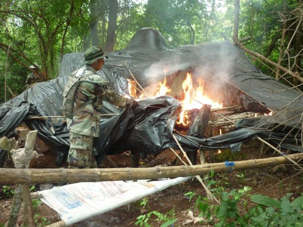 Ao todo foram destruídas 168 hectares de plantações de maconha no Paraguai - Crédito: Foto: Senad/Paraguai