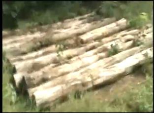 Polícia Ambiental faz uma das maiores apreensões de madeira do DF -