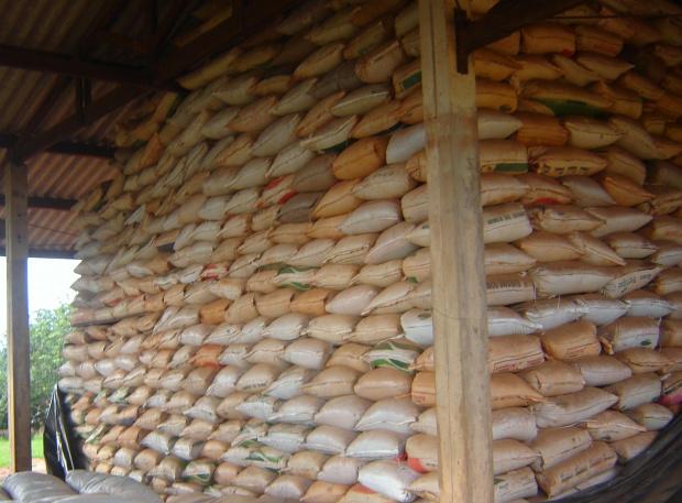 Fiscais do Mapa apreenderam sementes forrageiras em Mato Grosso do Sul - Crédito: Foto: Divulgação