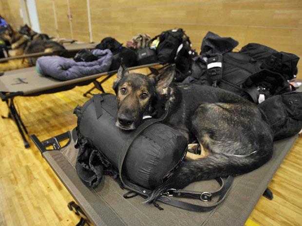 Cães descansam no abrigo-escola de Setamai school em Sumita - Crédito: Foto: Matt Dunham/AP