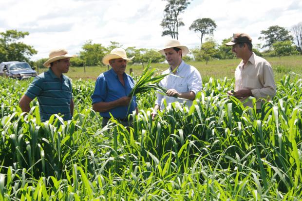 Produtor mostra a qualidade do pasto para o prefeito Renato Câmara - Crédito: Foto: Paulo César