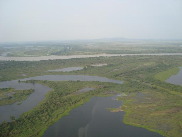 Prejuízo dos criadores com cheia no Pantanal já ultrapassa R$ 190 milhões - Crédito: Foto: Denilson Lima/Campo Grande News