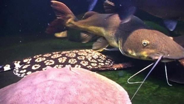 O aquário custou cerca de R$ 13 mil e tem arraias, tartarugas e peixes - Crédito: Foto: BBC