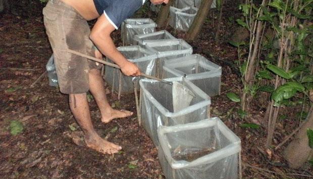 Alevinos eram mantidos em sacos plásticos. - Crédito: Foto: Divulgação/Ibama