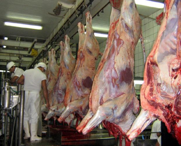 MS abateu 776.237 cabeças de gado no último trimestre de 2010 - Crédito: Foto: Divulgação