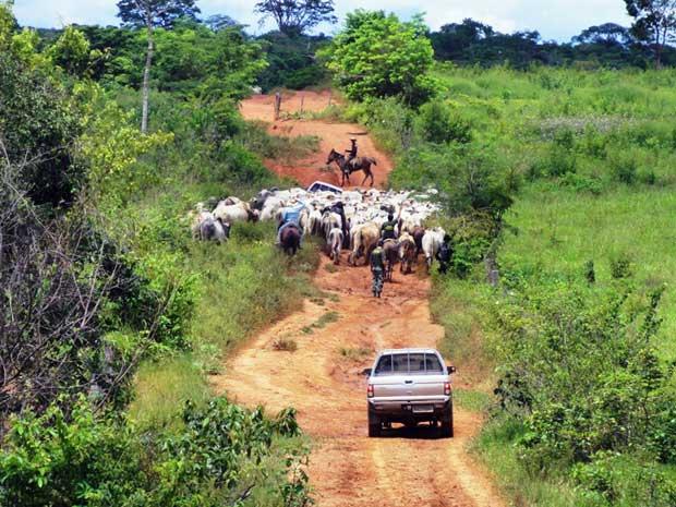 Bois apreendidos no Pará. - Crédito: Foto: Nelson Feitosa/ Ibama/ Divulgação