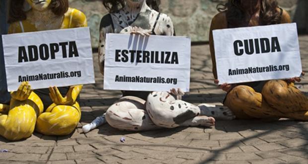 Ativistas de ONG mexicana protestam nesta segunda-feira - Crédito: Foto: AFP