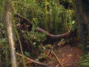 Árvores e lama interrompem vários pontos do Caminho de Itupava, na Serra do Mar - Crédito: Foto: Divulgação/ Agência Estadual de Notícia