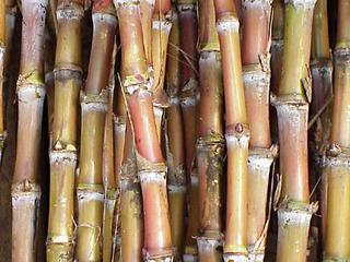 Mato Grosso do Sul é o Estado que mais cresce em produção de cana-de-açúcar - Crédito: Foto : Divulgação