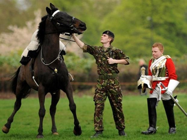 Membro da cavalaria real é ajudado após cair do cavalo durante ensaio para o casamento do príncipe William - Crédito: Foto: Ben Stansall / AFP