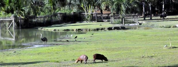 Zoológico da UFMT precisa renovar licença ambiental junto à Sema - Crédito: Foto: Denise Soares/G1 MT