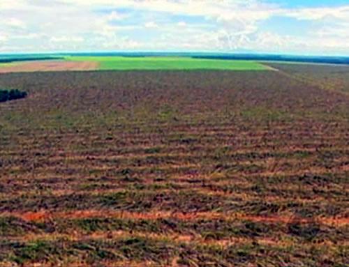 Desmatamento registrado em Mato Grosso  - Crédito: Foto: reprodução TV Centro América
