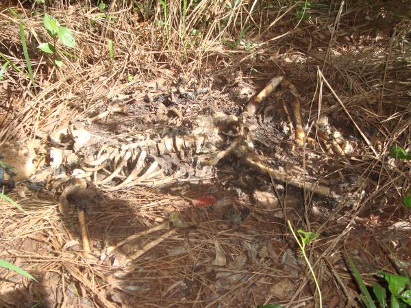 Ossada foi encontrada perto às margens do Córrego Laranja Doce. - Crédito: Foto: Cido Costa