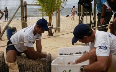 Tartaruguinhas nasceram na quinta - Crédito: Foto: PAT Ecosmar