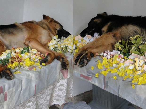 Os cães Lyon e Dox foram cremados com honras militares em Minas. - Crédito: Foto: Heloísa Mendonça/G1
