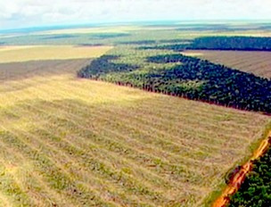 Ministra exige que desmatamento em Mato Grosso seja zero - Crédito: Foto: Reprodução/ TVCA
