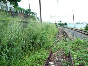 Vegetação alta compromete segurança  - Crédito: Foto: Divulgação/ Sindiferro