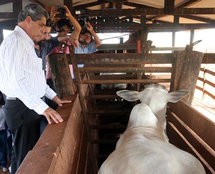 Prorrogação da campanha foi determinada pelo governador - Crédito: Foto : Rachid Waqued