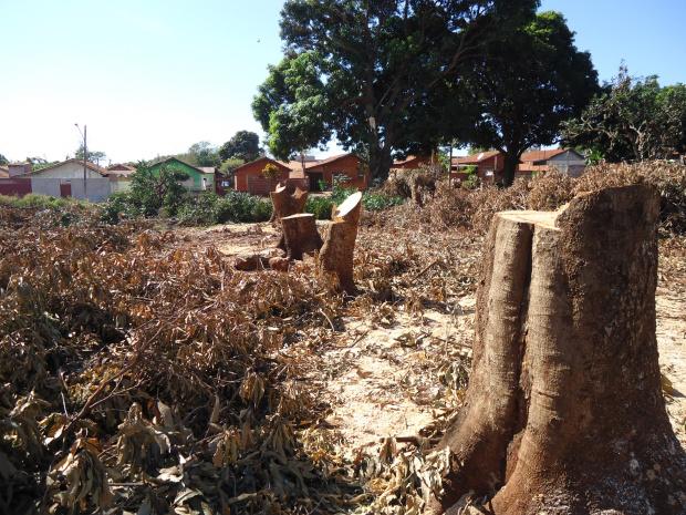 Mais de 20 árvores foram exterminadas de praça pública em Dourados - Crédito: Foto: Divulgação