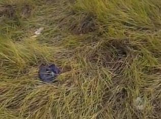 Polícia investiga possível sequestro e execução em Campo Grande -