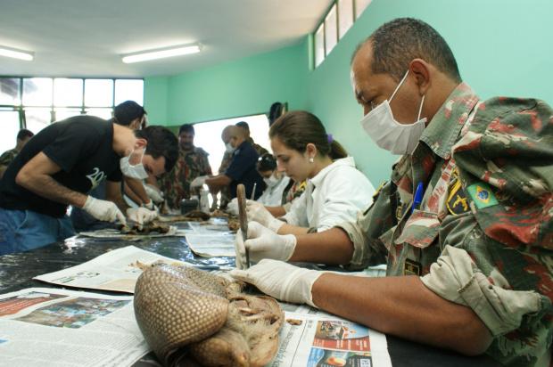 Animais vítimas de atropelamento e caça passam por processo de empalhamento - Crédito: Foto: Hedio Fazan/PROGRESSO