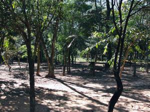 Bosque deve passar por revitalização  - Crédito: Foto: Divulgação/Prefeitura