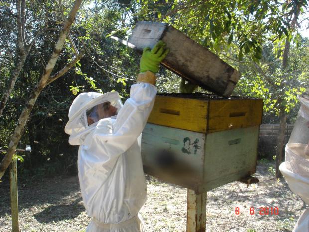 Produção de mel este ano deve superar a do período anterior, estimam produtores - Crédito: Foto : Hedio Fazan/PROGRESSO