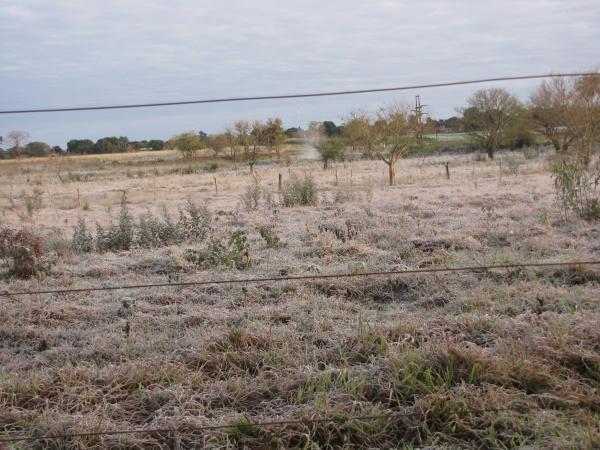 Cidade amanheceu coberta de gelo ontem; temperatura chegou a 1ºC na madrugada - Crédito: Foto : Cleire Bhenetys