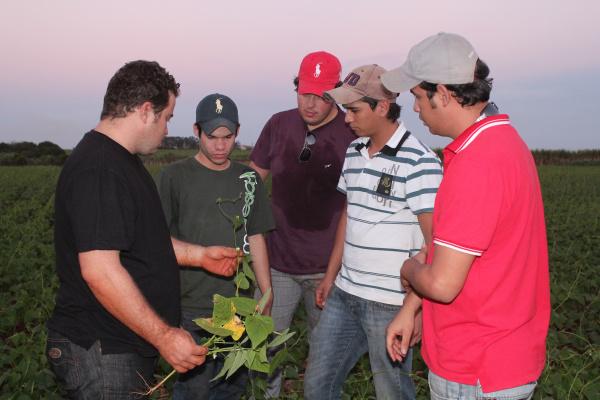 Estudo analisa nas células das plantas cultivadas em solos compactados -