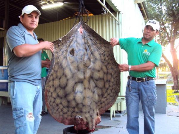 FOTO DO FATO  Já que ontem essa seção mostrou a foto de um jaú de 180 kg pescado em Cáceres - Crédito: pra gaúcho nenhum por defeito!