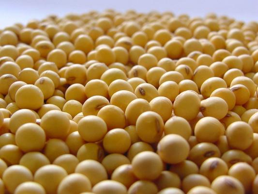 Três culturas concentraram 62,7% do valor total da produção, sendo a soja a de maior participação - Crédito: Foto: Divulgação