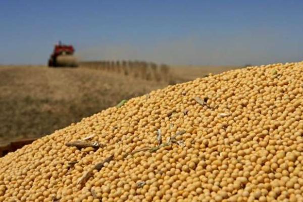 Produção de cereais, leguminosas e oleaginosas para o próximo ano foi estimada em 206,5 milhões de toneladas. - Crédito: Foto: Reprodução