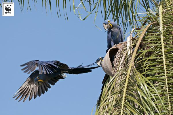 Exposição traz fotografias de Adriano Gambarini, fotógrafo da revista National Geographic Brasil, que mostra o Pantanal em sua rica biodiversidade. - Crédito: Foto: Adriano Gambarini