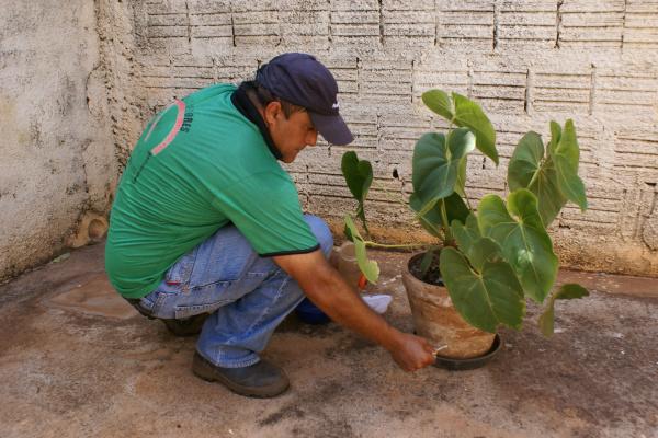 Agente de controle de vetores realiza trabalho preventivo em residência urbana de Caarapó. - Crédito: Foto: Dilermano Alves